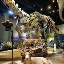 perot museum of nature and science 1069 photos 436 reviews