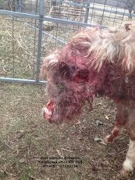 boxer dog kills man vicious dog attacks oklahoma