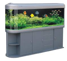 Beautiful Home Fish Tanks by Aquariums For Home 18 Beautiful Inspiration House Shaped Fish Tank