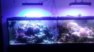 led reef lighting reviews ocean revive t247 vs china led marsaqua youtube