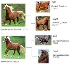 Are Horses Color Blind The Perils Of Breeding Horses For Color Horsetalk Co Nz