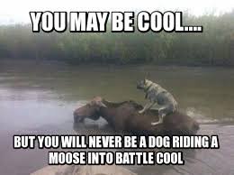 Moose Meme - meme contest winners dog riding a moose mandatory
