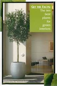 10 best plants for green interiors green plants for green buildings