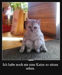 s e katzen spr che 227 best kittys images on entertainment feelings and