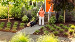 backyard ideas for dogs veterinary pet health care 8 droolworthy