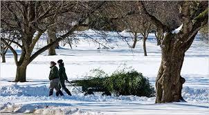 an earmuff guide for winter garden strolls the new york times