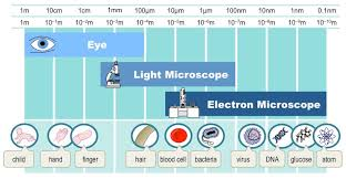 name one advantage of light microscopes over electron microscopes electron microscopy bioninja