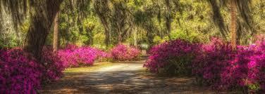 family dollar garden city ga the blog of discover historic america tours