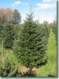about the trees werner christmas tree farm vermont christmas
