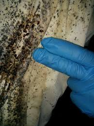 National Bed Bug Registry 15 Best Bed Bug Pics Images On Pinterest 3 4 Beds Bed Bugs And