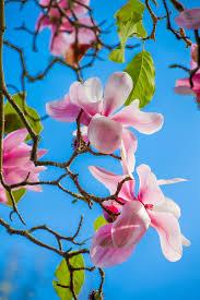 Botanical Gardens Golden Gate Park by Winter Magnolias Flower Magazine
