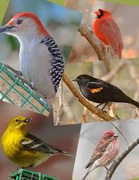 identify your common backyard birds youtube