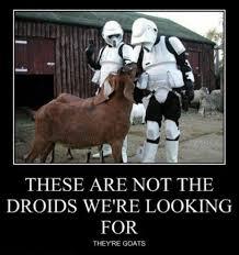 Droid Meme - 13 best star wars nonsense images on pinterest star wars starwars