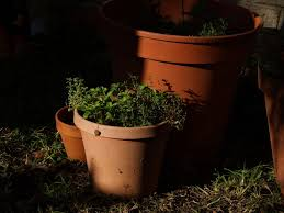 bringing herbs in for the winter how to grow and enjoy herbs