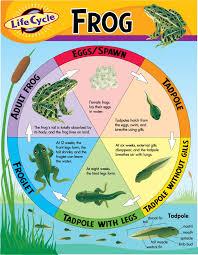 metamorphosis interactive felt book u2013 frog and butterfly raising