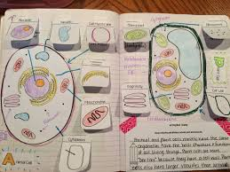 interactive science notebook ideas and photo gallery teaching