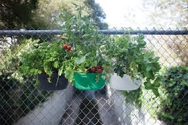 how to start a unique urban garden to grow lots of plants in so