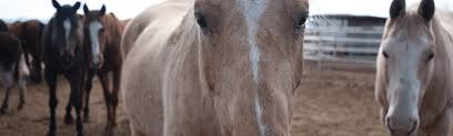 Horse Trailers For Rent In San Antonio Texas The Horse Export Business Booms In The Texas Borderlands