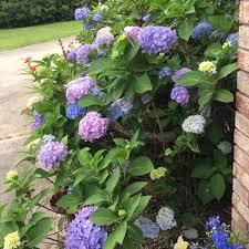 Hydrangea Flowers 6c8fe0128e9bafe33a3bf844a560b9eb Original Jpg