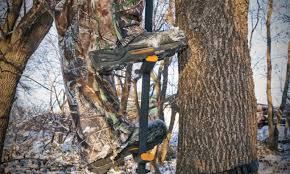 best climbing sticks for getting into tree stands advanced