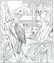 nature scene coloring pages 126 best coloring pages nature images on pinterest coloring