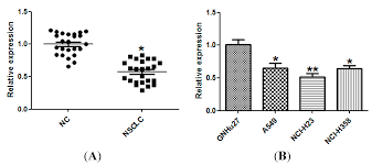 ijms free full text mir 143 inhibits nsclc cell growth and