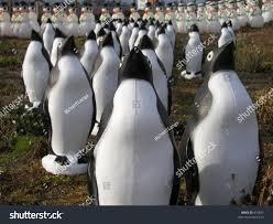 plastic penguin lawn statues sale sonoma stock photo 816635