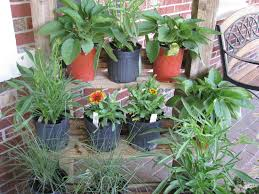 native plant sale get those autumn native plants at our sale north carolina