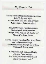 Words To Comfort Someone Who Lost A Loved One Best 25 Losing A Pet Ideas On Pinterest Losing A Dog Dog