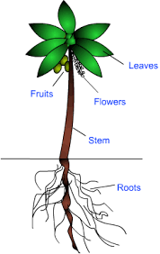 class notes getting to know plants science class 6 edurev