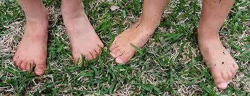 Ants In Backyard Diy Ant Poison The Easiest Safest U0026 Most Effective Diy Ant Killer