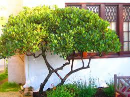 triyae com u003d narrow backyard trees various design inspiration