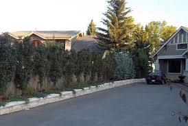 effective driveway landscaping ideas for a narrow strip between