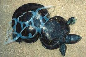 photos showing animal victims trash