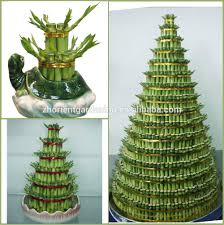 tower layered lucky bamboo air bonsai tree dracaena sanderiana
