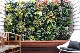 Best Plants For Vertical Garden - marvelous vertical garden melbourne part 5 vertical garden in