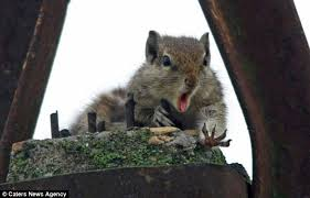 Dramatic Squirrel Meme - oh nuts poor squirrel looks devastated after dropping his snack