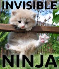 Invisible Cat Memes - invisible ninja cat meme shared by yanito freminoshi