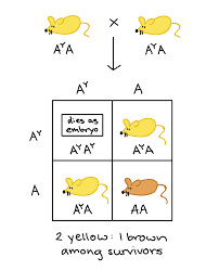 pleiotropy and lethal alleles article khan academy