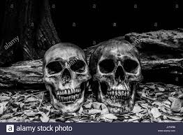 horror halloween background still life photography with human skull and timber background