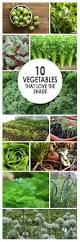 Shade Garden Vegetables by 22 Gardening Hacks Everyone Should Know Gardens Outdoor Living