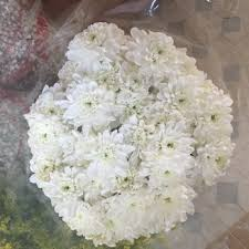 Wholesale Fresh Flowers Fresh Flowers Wholesale 105 Photos U0026 54 Reviews Florists