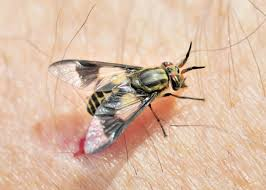 deer fly control pest control chemicals 800 877 7290