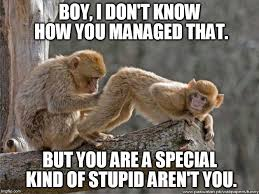 Funny Monkey Meme - boy i don t know how you managed that funny monkey meme picture