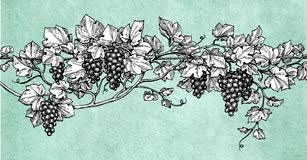grapevine ink sketch stock vector image 93822153