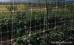 Garden Netting Trellis Vertical Trellis Netting For Maximum Returns On Your Crops