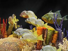 thanksgiving reefs coral reefs