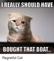Cat Buy A Boat Meme - really should have bought that boat mematic net regretful cat