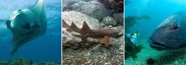 jawed fish fish u0026 fishing u s national park service