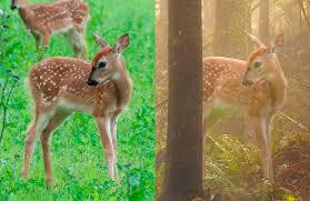 create magical forest scene u2014 robert cornelius